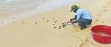 Turtle conservation in troubled sands
