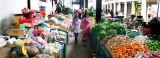 Veggie farmers cry out for sales  channels for their surpluses