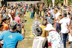 Political symbolism: Elephant versus others