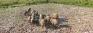 Deegavapi garbage dump — a graveyard for elephants