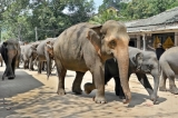 FEO condemns rampant abuse  of  captive elephants and wildlife