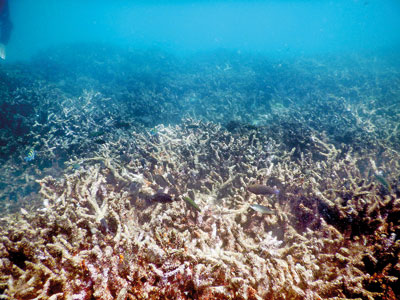 Floating lifeline to rescue dying Bar Reef   The Sunday