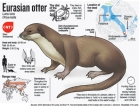Calls to protect Colombo's urban wildlife as dead otter discovered near Parliament