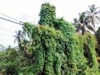 Aluthgama: Now an eyesore