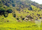 Conservation land released  for development projects,  RTI response shows