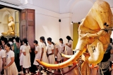 Rare ivory and pearl exhibition with a message