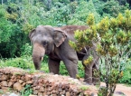 Environmentalist outlines steps to ensure Sinharaja elephants remain in the Rainforest