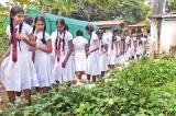 Green Garden, Greenhouse handed over to Pattirippu MV