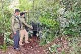 Hunt on for large  leopard in Nuwara Eliya