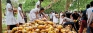 King coconut dansela for travellers to ancient city