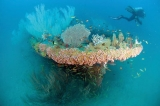Shipwreck tourism: Lanka's buried treasure