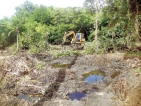 Three arrested for destroying mangroves