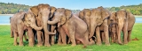 Jumbos and us; we are so much alike
