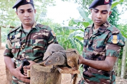 Mongoose, sniff out explosives, instead of snakes