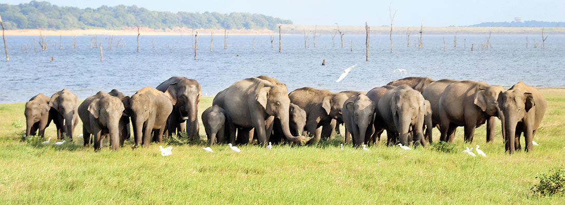 Human-elephant conflict: The folly of fences