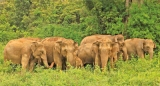 Elephant Project bags PATA Gold Award 2018