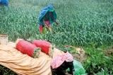 Nuwara Eliya suffers in  treacherous conditions
