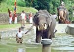 Pond for perahera elephants