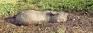 Stuck in the mud, five elephants die in Mahaweli marshes