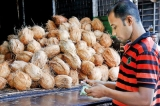 Coconut prices ease