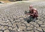 Heartbreak instead of harvest for Puttalam farmers