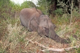 Group searches  ways to end elephant carnage on rail tracks