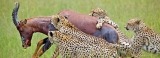 Africa's wilds beckon