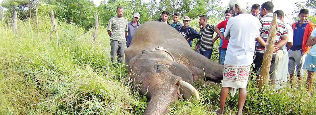 Multi-pronged effort to save elephants from trains