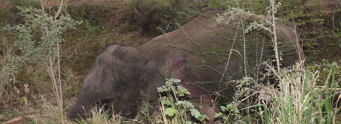 Key elephant-train solutions derailed