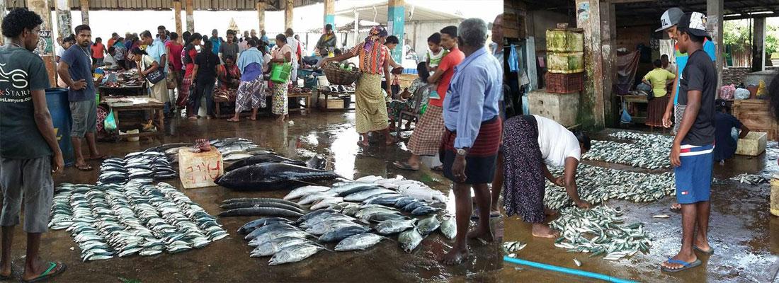 Fish aplenty but low returns complain fishermen