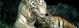 Safari Tour at the Zoological Gardens