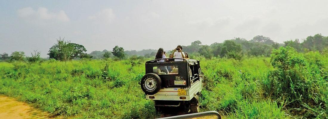 NCHS Kandy campus students, enjoy an exciting safari in Habarana