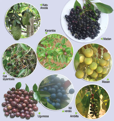 Forgotten fruits are the best | The Sunday Times Sri Lanka