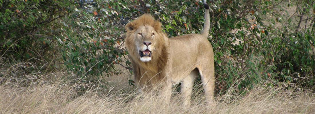 A Serengeti experience