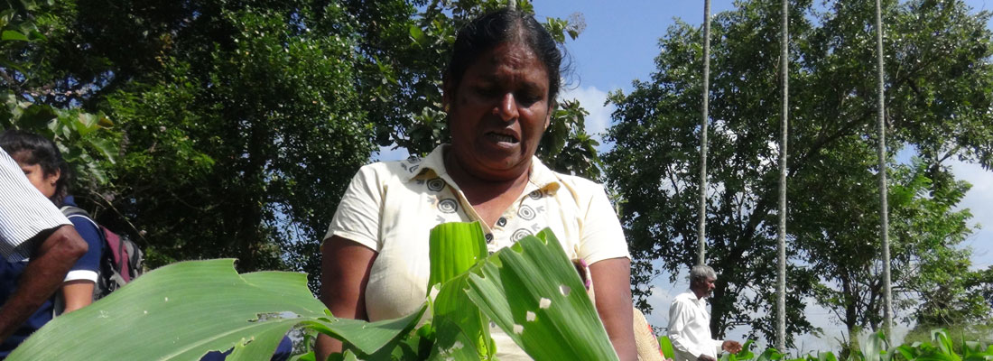 Govt. extends war on  Fall Army Worm