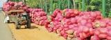 From bumper harvest blooms a pumpkin festival as farmer aid