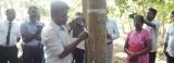 Wonder tree from Amazon rain forest, now flourishing in Sri Lanka's dry zone