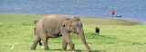 Humans and elephants are living together