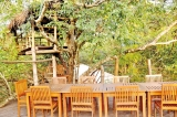 Amaara Forest':  Luxury blends with wild