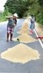 Roadside paddy