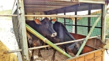 Wellard urges changes to farm selection criteria as plight of Lankan dairy farmers hits the headlines in Australia
