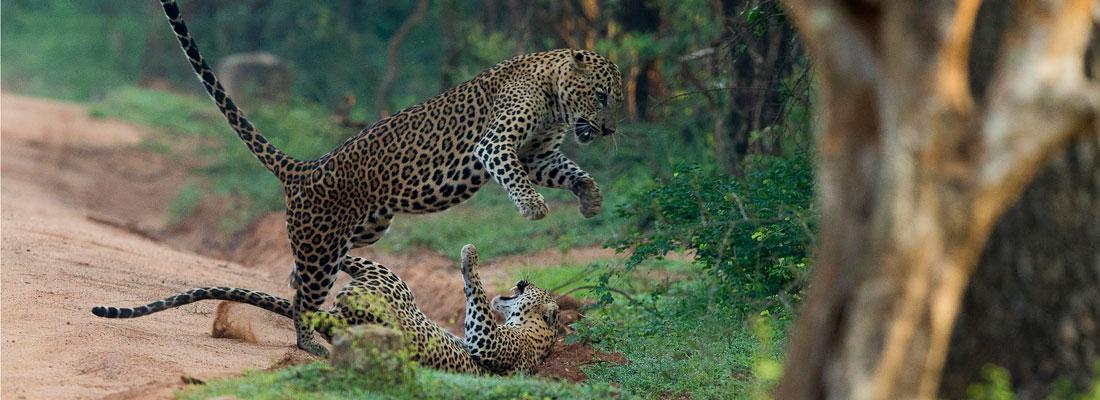 Experts talk on Sri Lanka's wildlife conservation