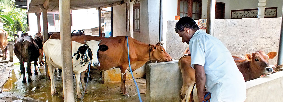 Small cattle farmers seek state support