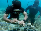 Foundation of Goodness partners Tokyo Cement to restore southern coral reefs