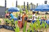 Nestlé Coconut Plan benefits  1,000 more rural families