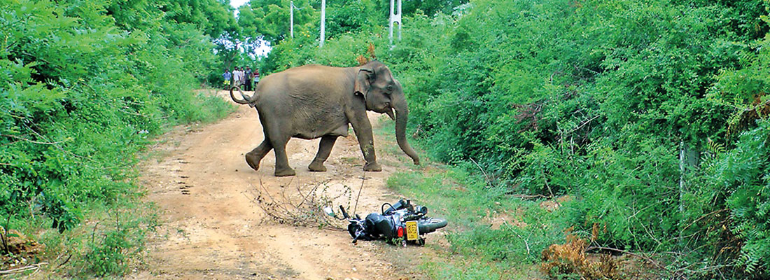 Unplanned land use and elephant encroachment