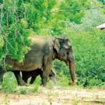 Baby-Elephan-(12)