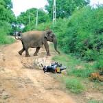 Baby-Elephan-(2)