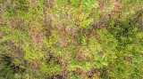 Diyakothakanda Forest Restoration Project