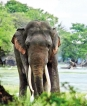 Tusker returns after a year